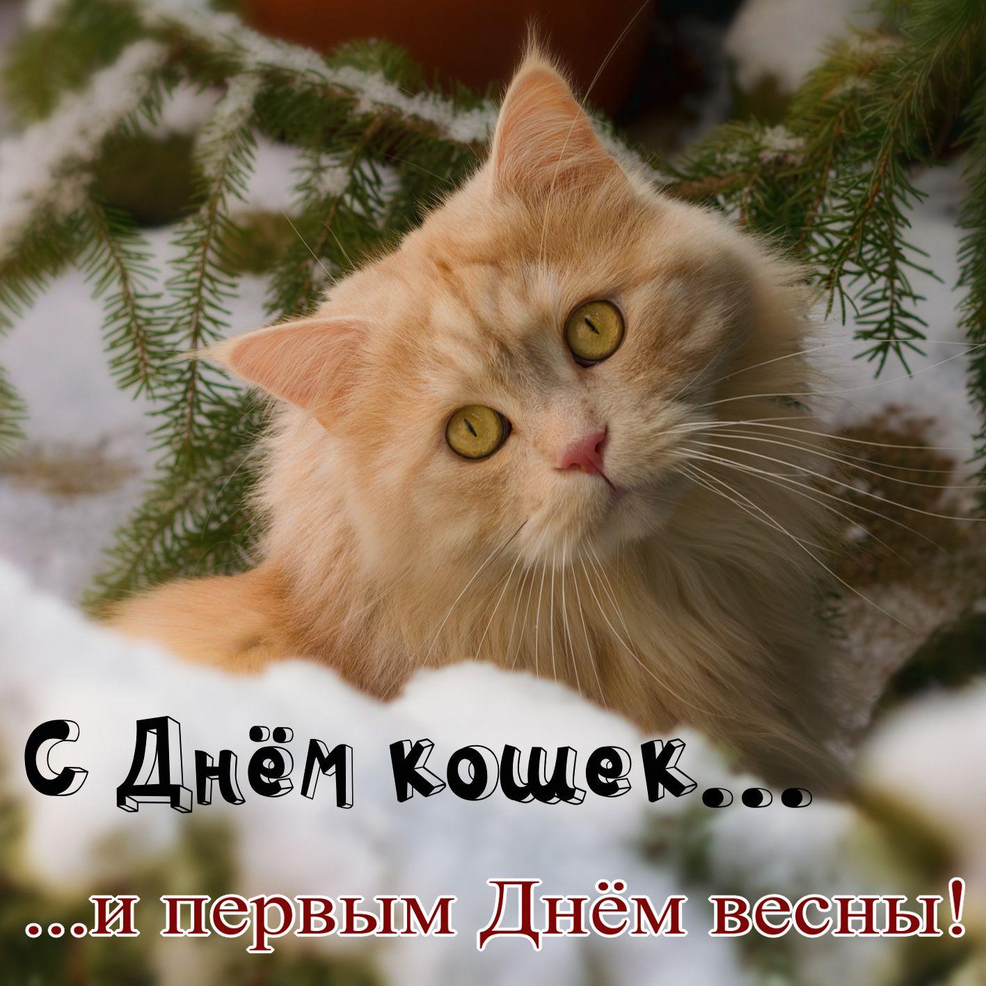Рыжая кошечка на снегу на первый День весны и День кошек