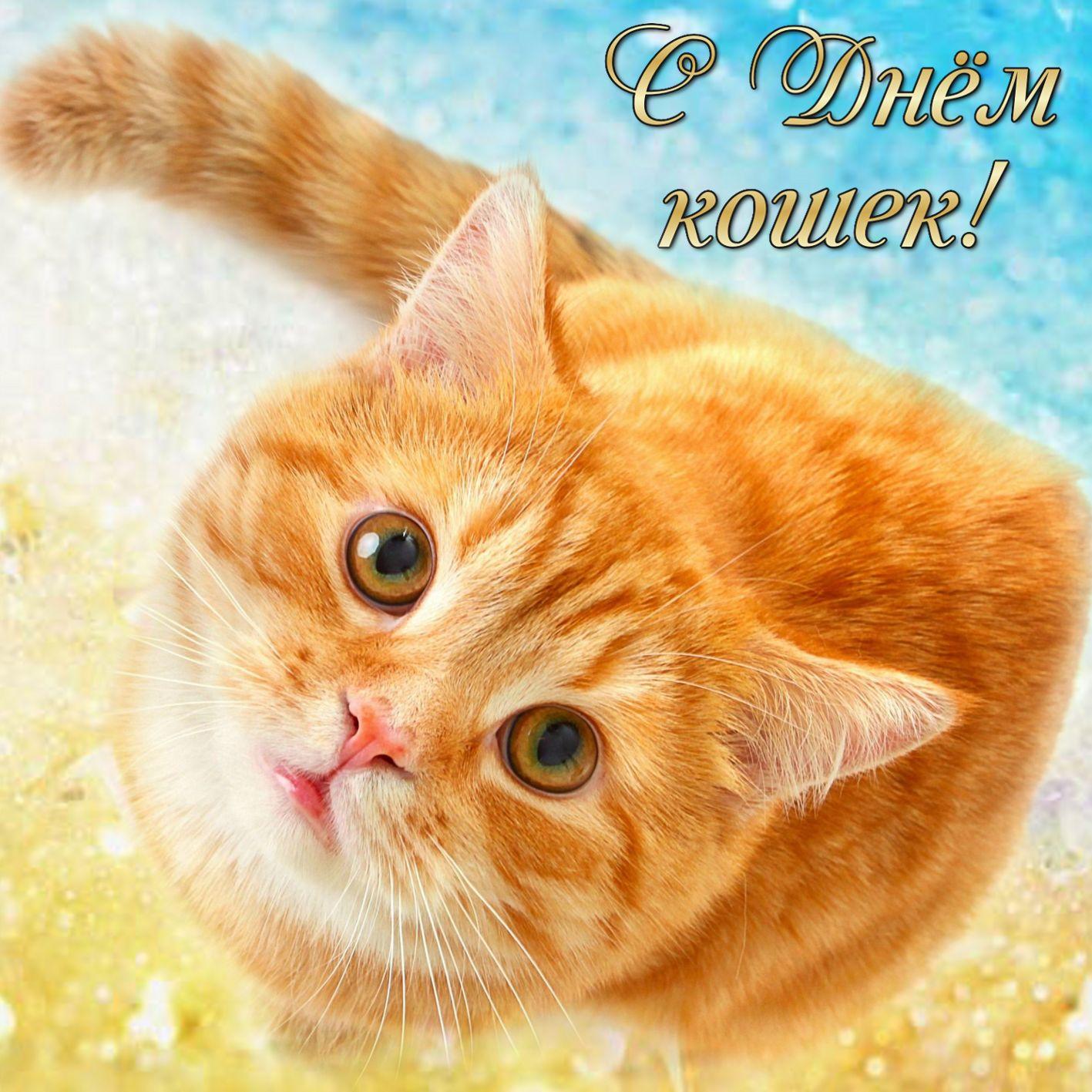 Открытка с рыжим котом на День кошек