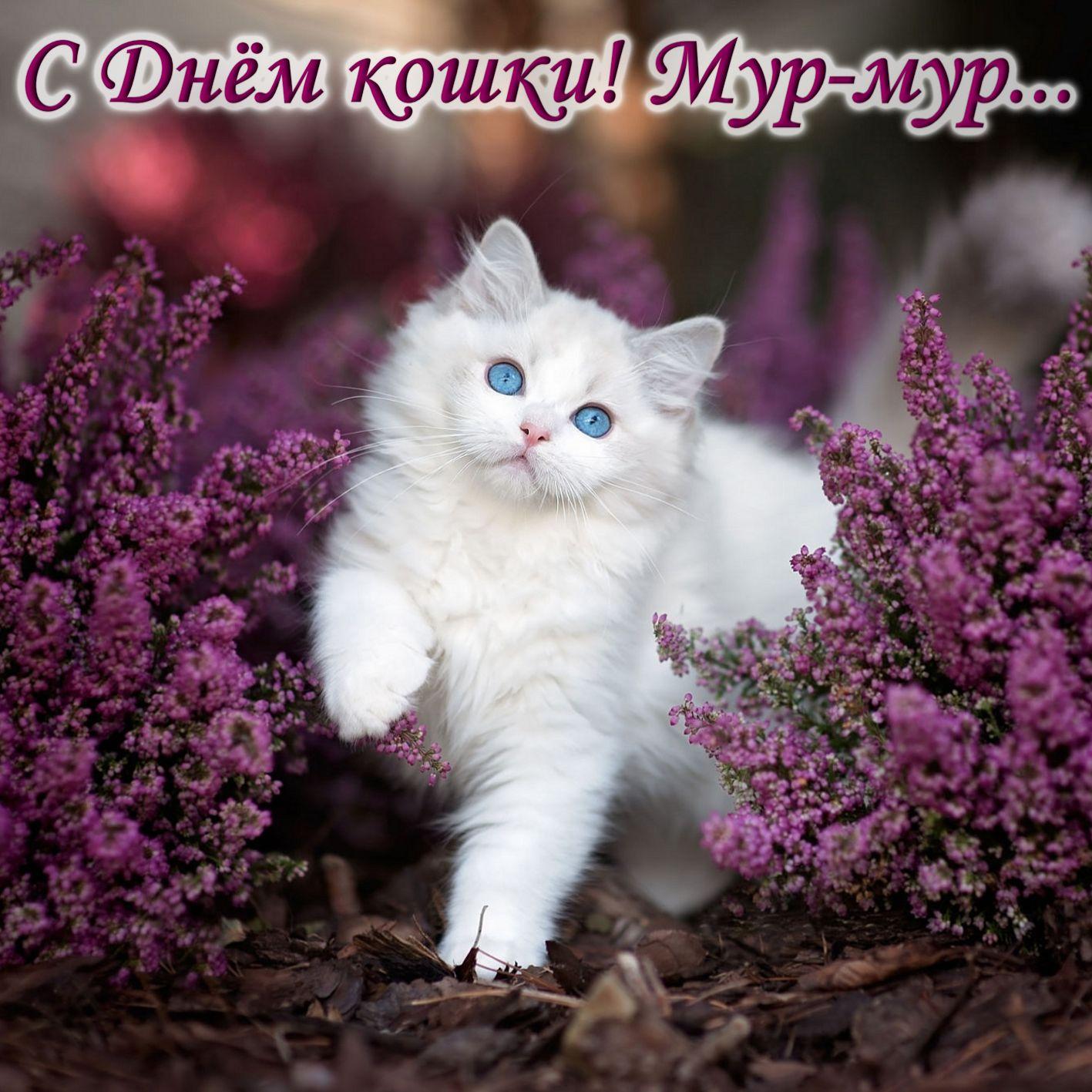 Открытка на День кошек - белый котик среди фиолетовых цветов