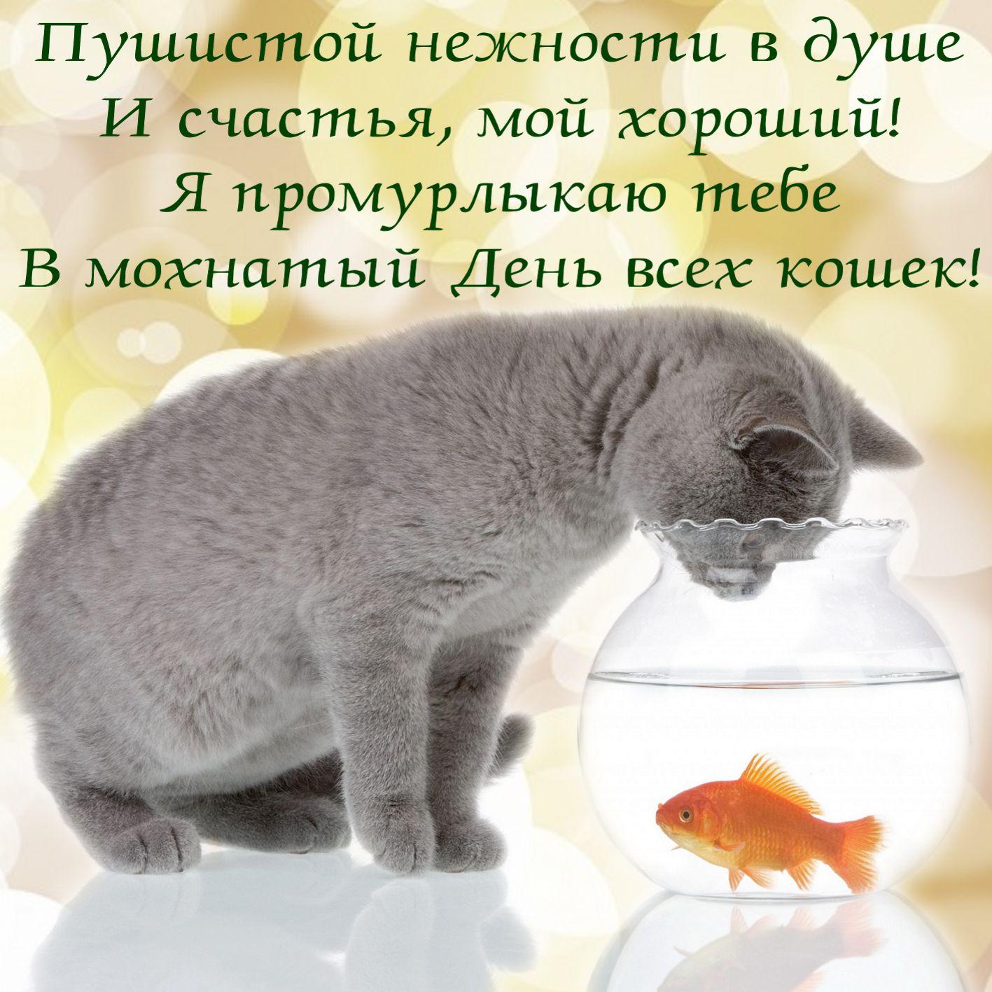 Открытка на День кошек - серый котик и золотая рыбка в аквариуме