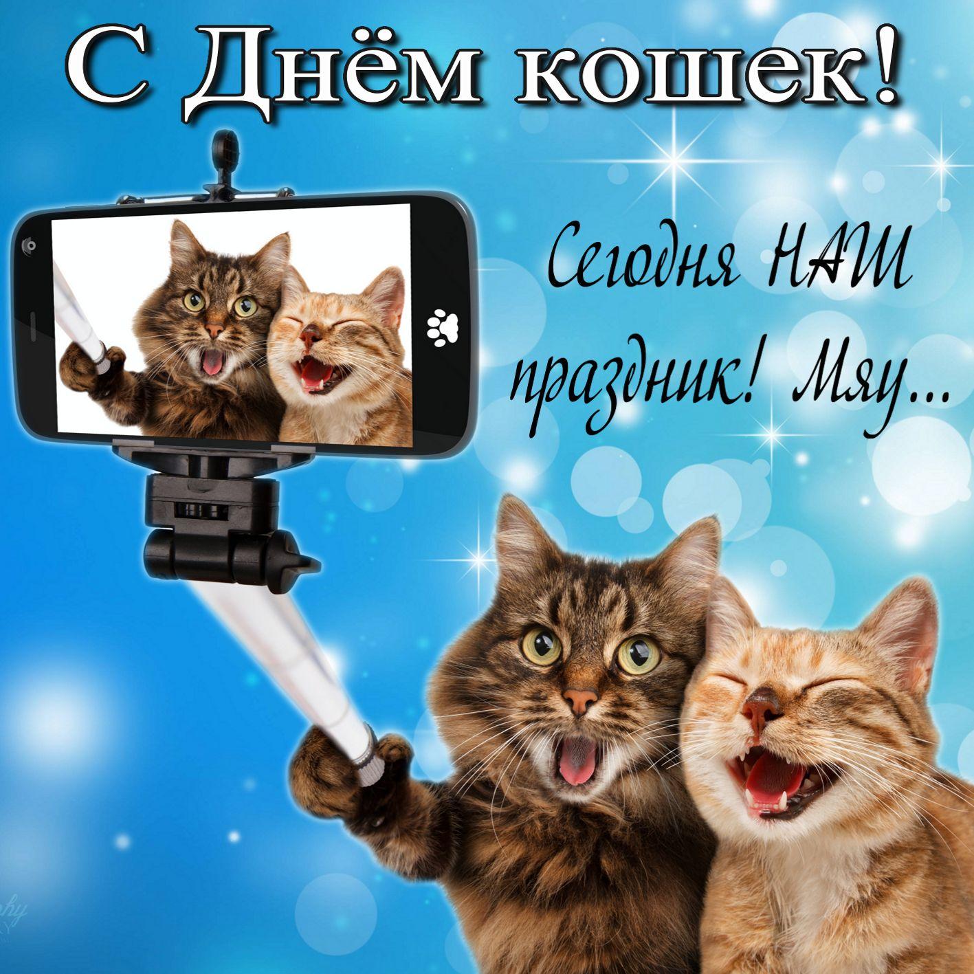 Прикольная открытка на День кошек