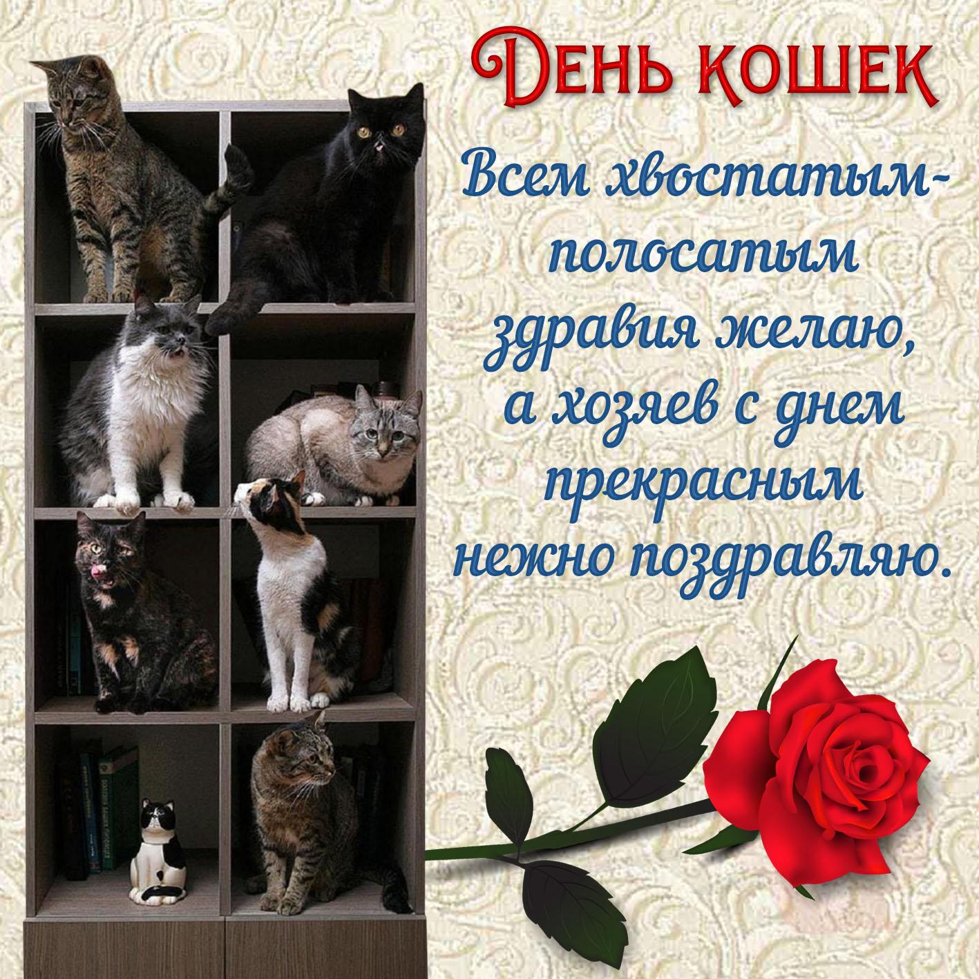 Открытки день кошек 8 августа красивые