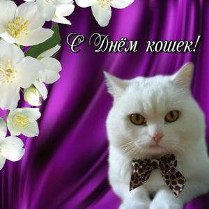 Белый котик на фиолетовом фоне