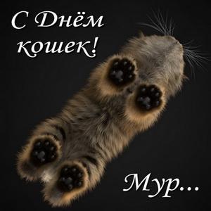 Оригинальная открытка к Дню кошек