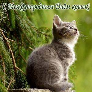 Мечтающий котик на зеленом фоне