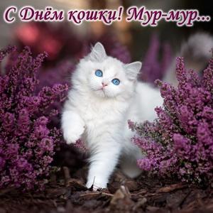 Белый котик среди фиолетовых цветов