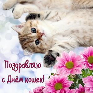 Красивый котенок поздравляет с Днем кошек