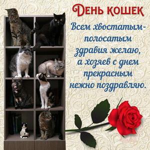 Открытка с поздравлением на День кошек