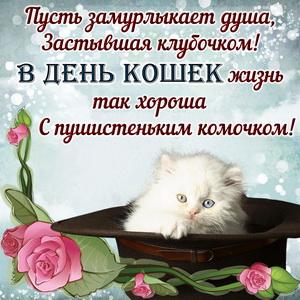 Милый котик в шляпе и пожелание в День кошек