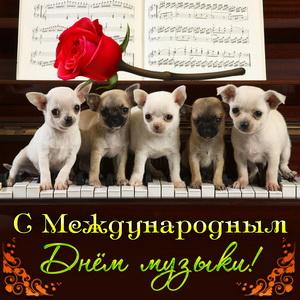 Милые собачки сидят на клавишах