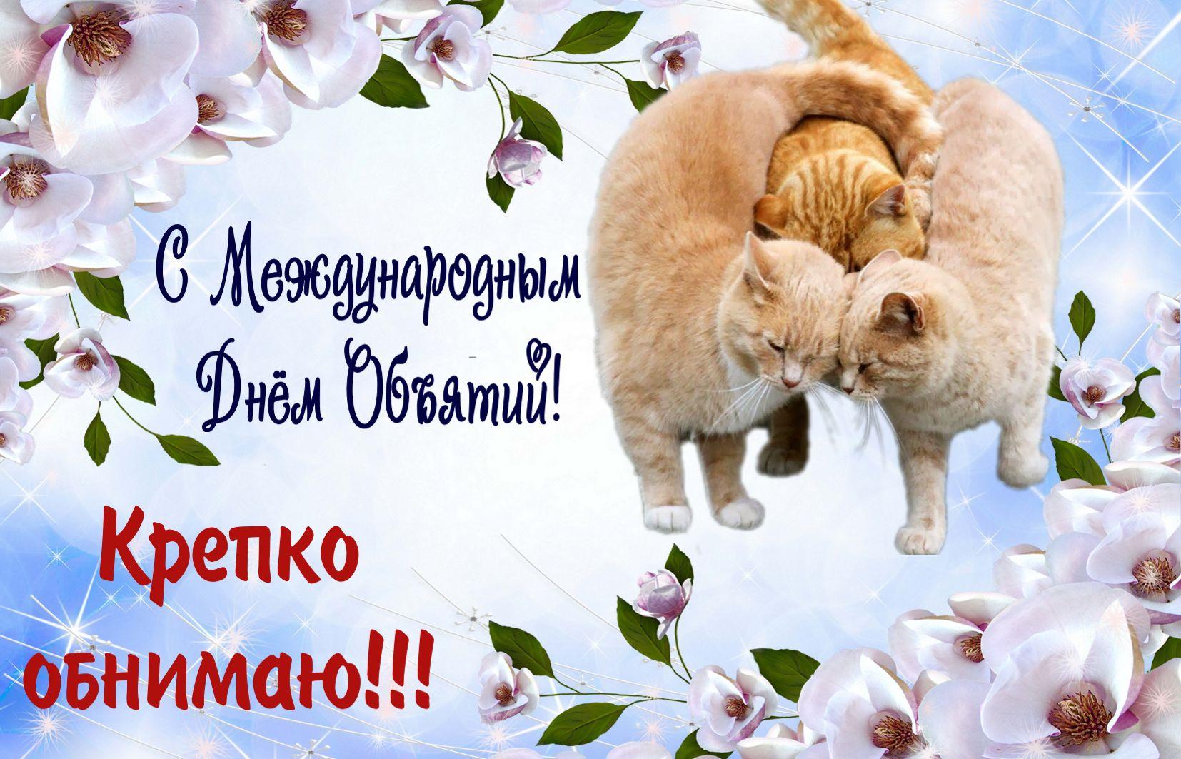 Открытка на День объятий - обнимающиеся котики на красивом фоне
