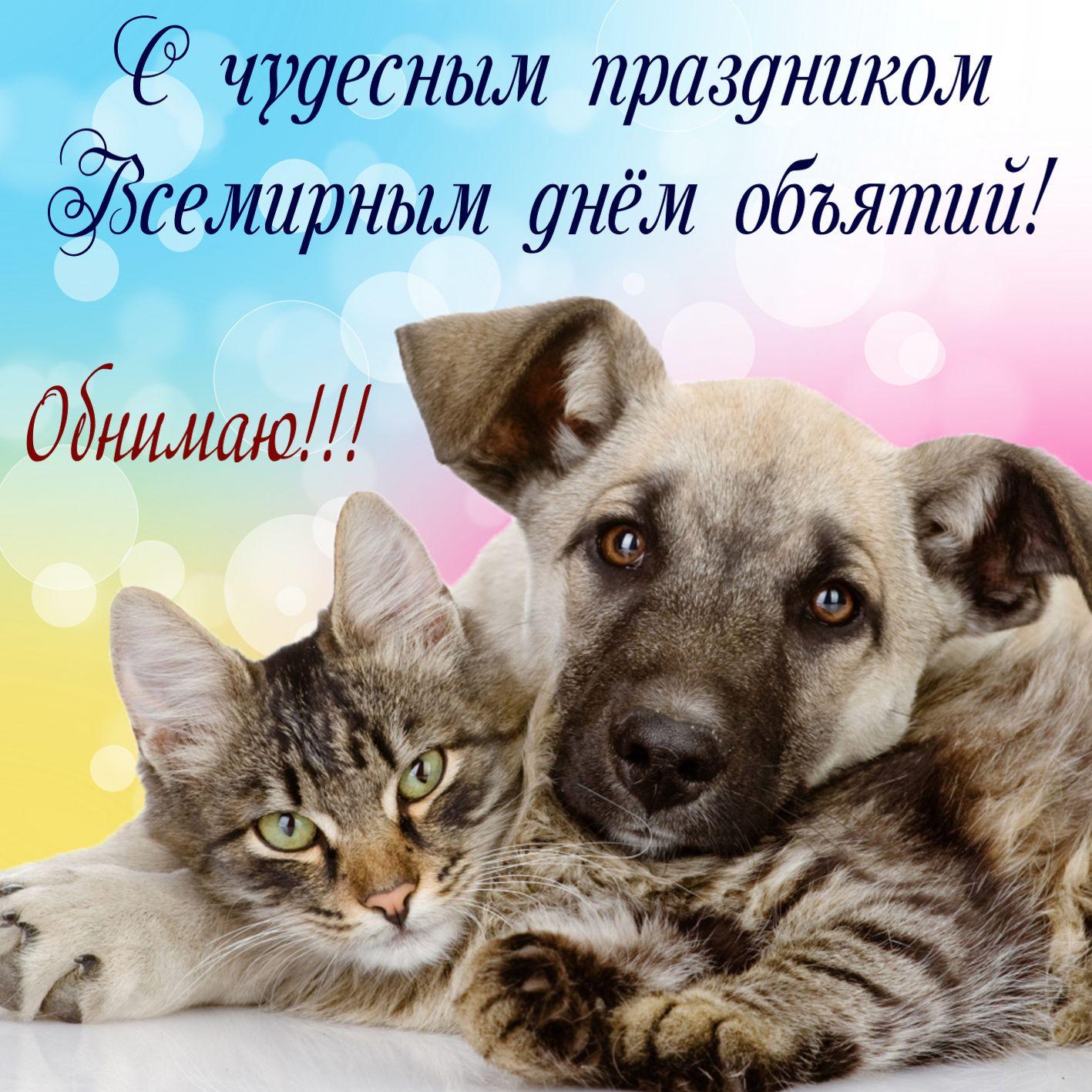 Красивые собачка и котик на Всемирный день объятий