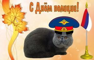 Красивый кот в полицейской фуражке