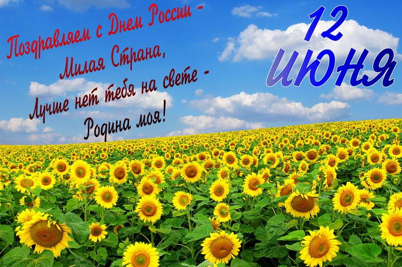 Поздравляем с Днём России, поле, подсолнухи