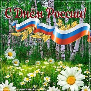 Открытка с березами и ромашками на День России