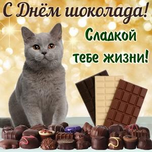 Серый котик в окружении шоколадок