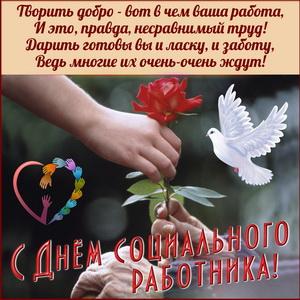 Поздравление соцработнику с розой в руке и голубем