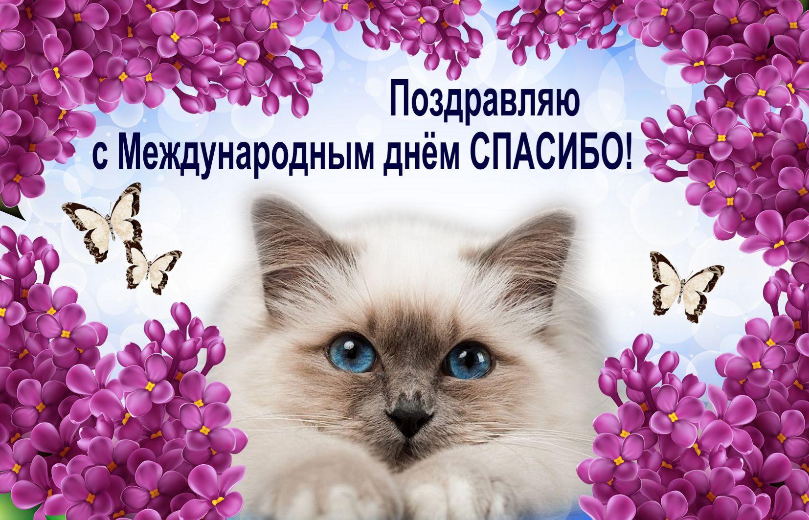 Открытка на День спасибо - котик в рамке из сиреневых цветов
