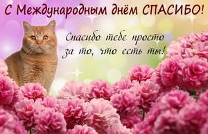 Красивый котик на фоне розовых цветов