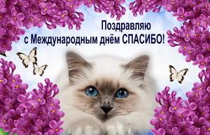 Котик в рамке из сиреневых цветов