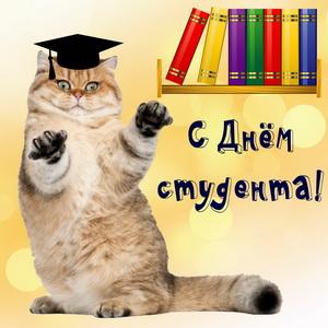Серьезный котик поздравляет с Днем студента