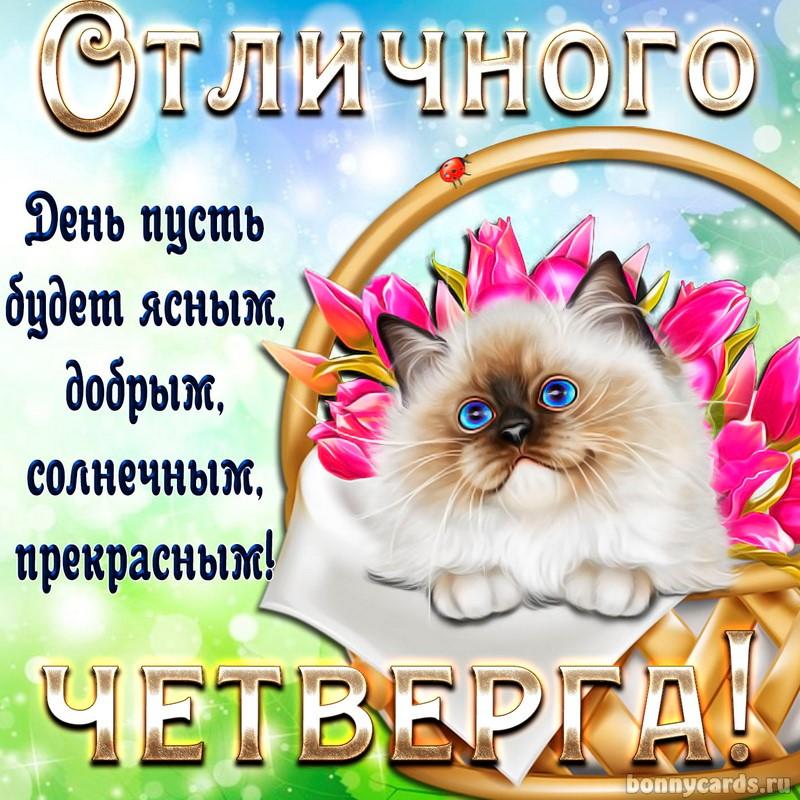 Котик желает отличного четверга на милой открытке