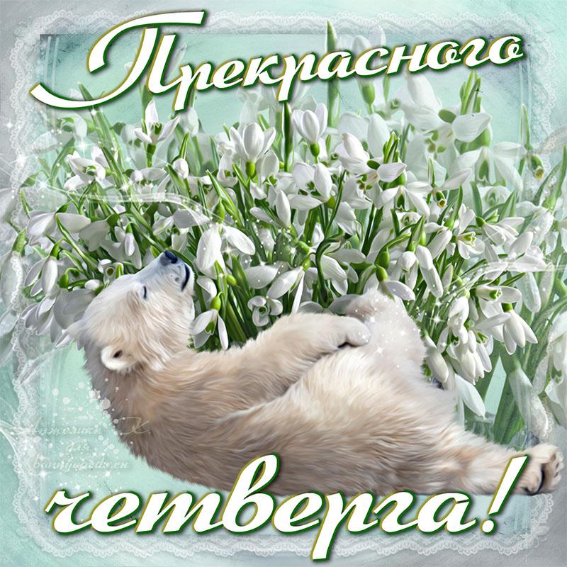 Открытка с белым мишкой желающим прекрасного четверга
