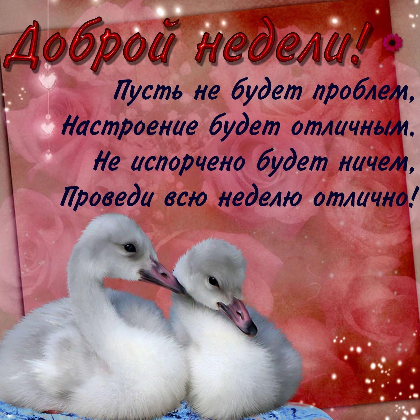 Милая картинка доброй недели с птичками