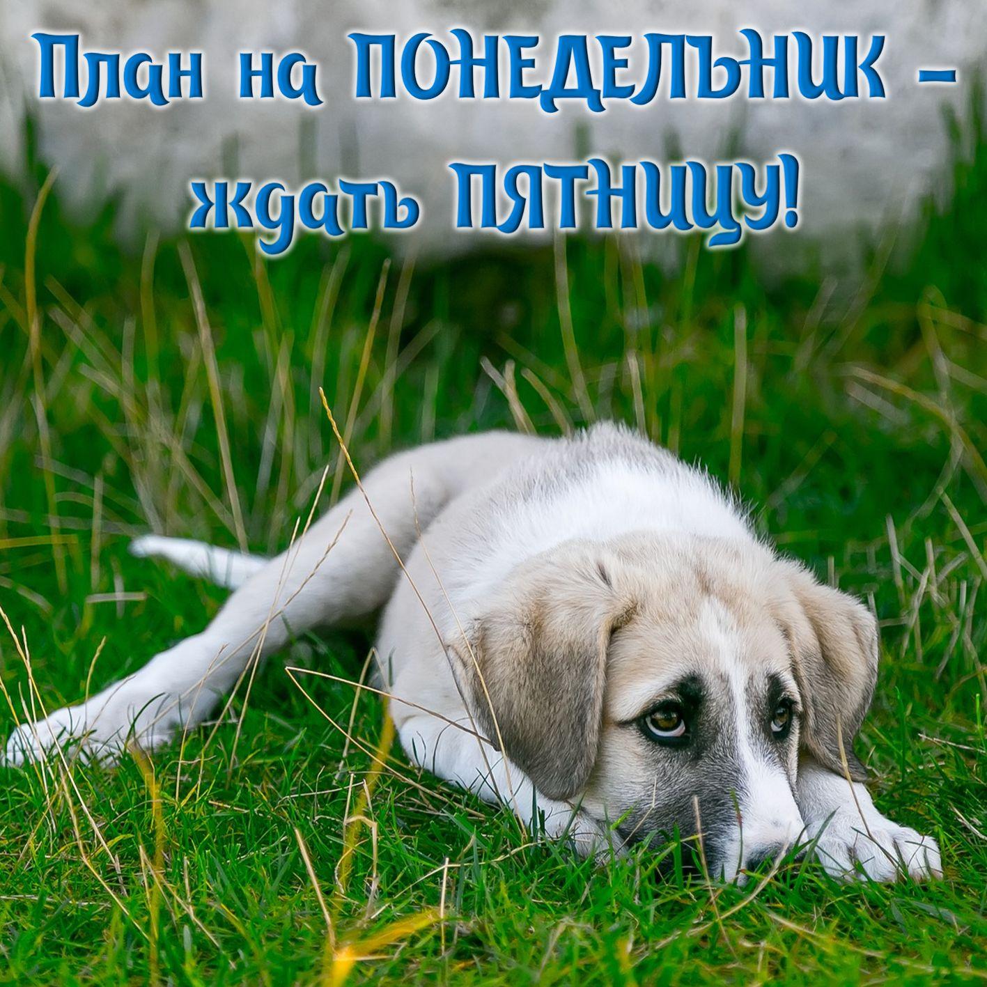 Грустная собачка ждёт пятницу