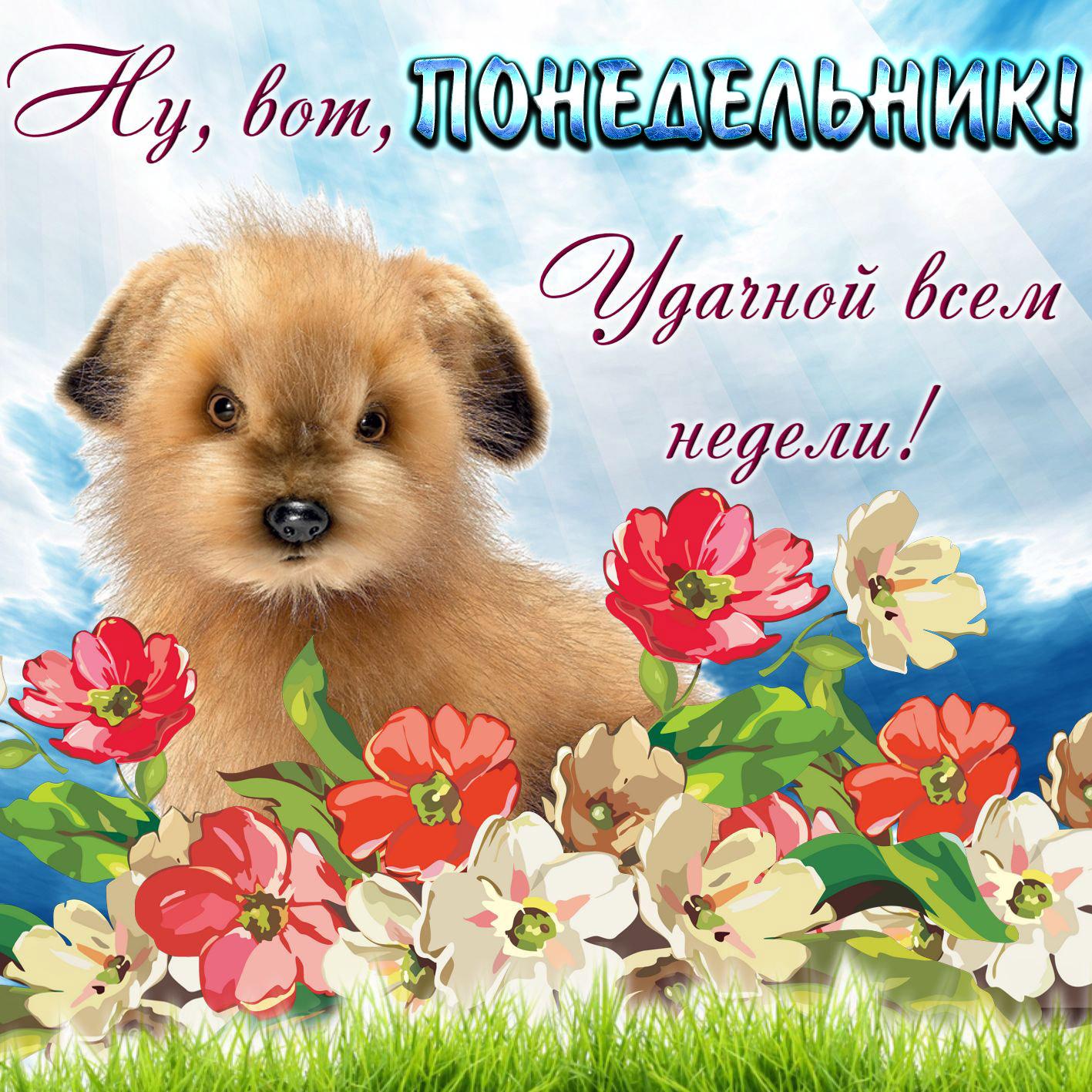 Вконтакте открытка
