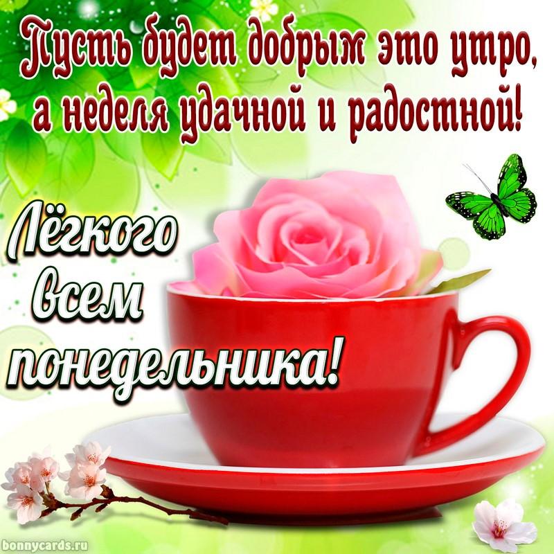 Картинка с розой в чашке для лёгкого понедельника