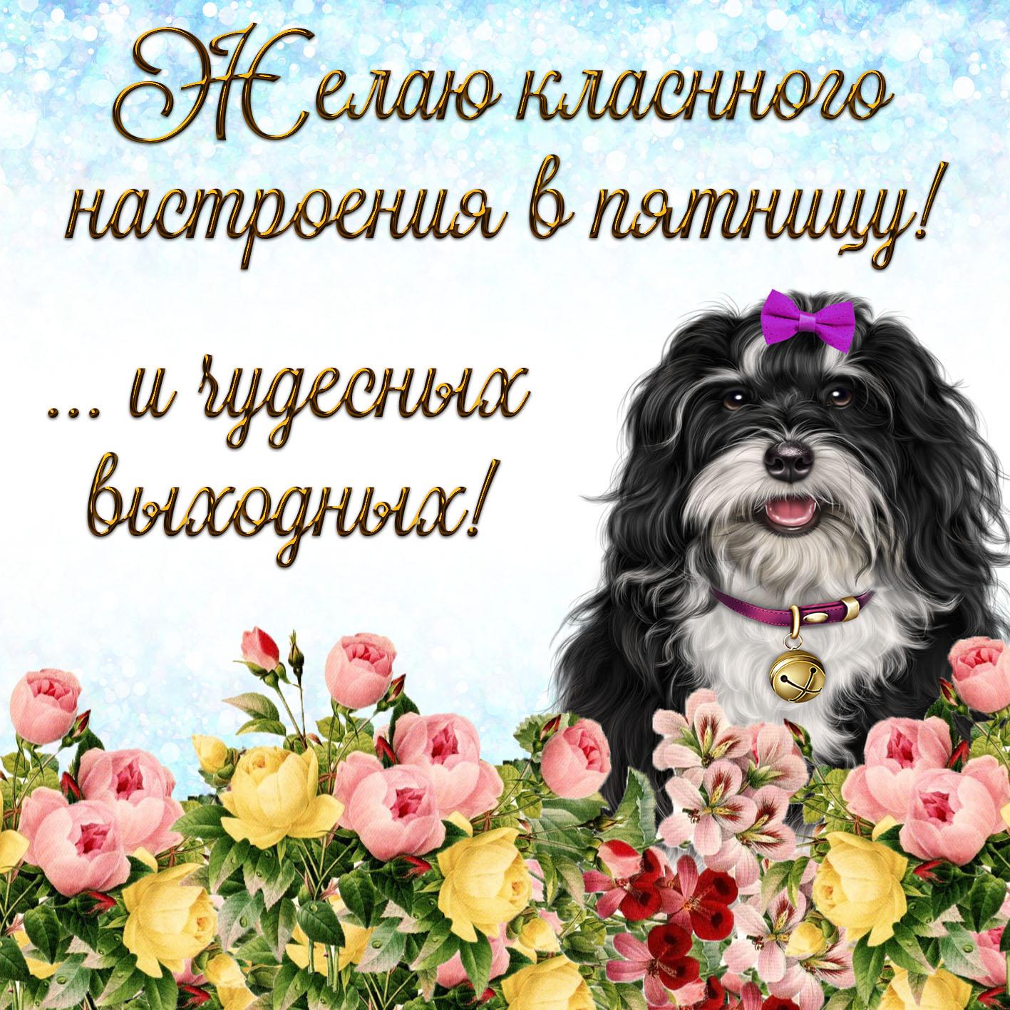 Открытка на пятницу - смешная собачка желает классного настроения