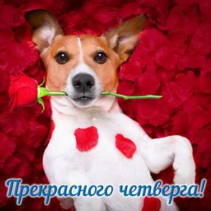 Картинка с собачкой на лепестках роз