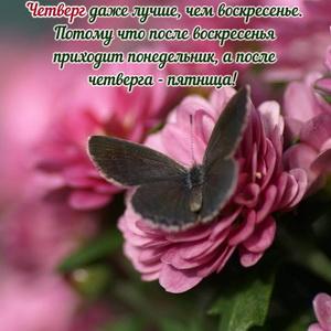 Открытка с бабочкой на розовом цветке