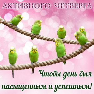 Зеленые попугайчики на веревке