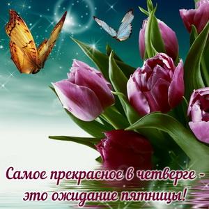 Открытка с тюльпанами на красивом фоне