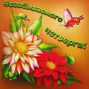 Картинка с красивыми, яркими цветами