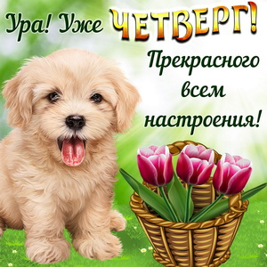 Забавная собачка и корзина цветов