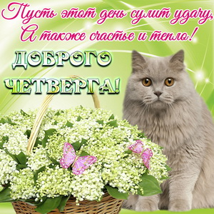 Открытка с цветами и красивым котом