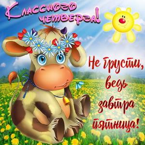 Забавная коровка желает классного четверга