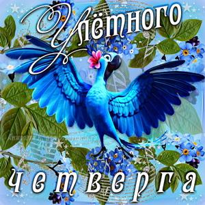 Открытка с попугаем и пожеланием улётного четверга