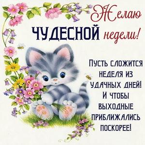 Картинка чудесной недели с котом и цветами