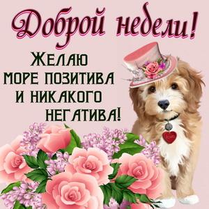 Милый пёсик в шляпке желает Вам доброй недели