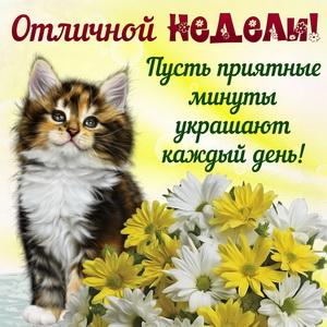 Красивый котёнок желает Вам отличной недели