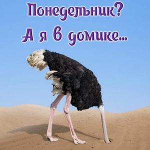 Картинка на понедельник со страусом