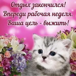 Недовольный котик на фоне цветов