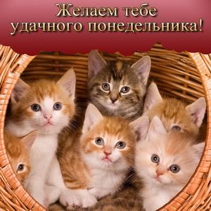 Котята желают удачного понедельника