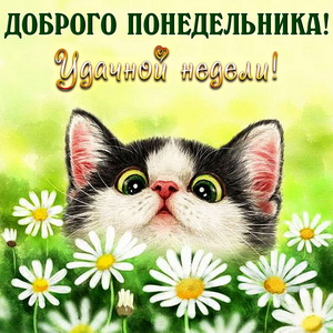 Забавный котенок на фоне ромашек