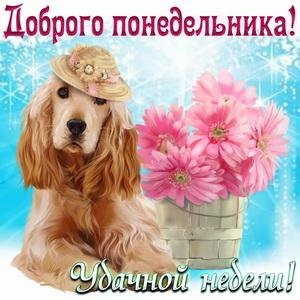 Собачка в шляпке и корзина с цветами