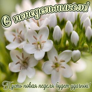 Картинка с красивыми белыми цветочками